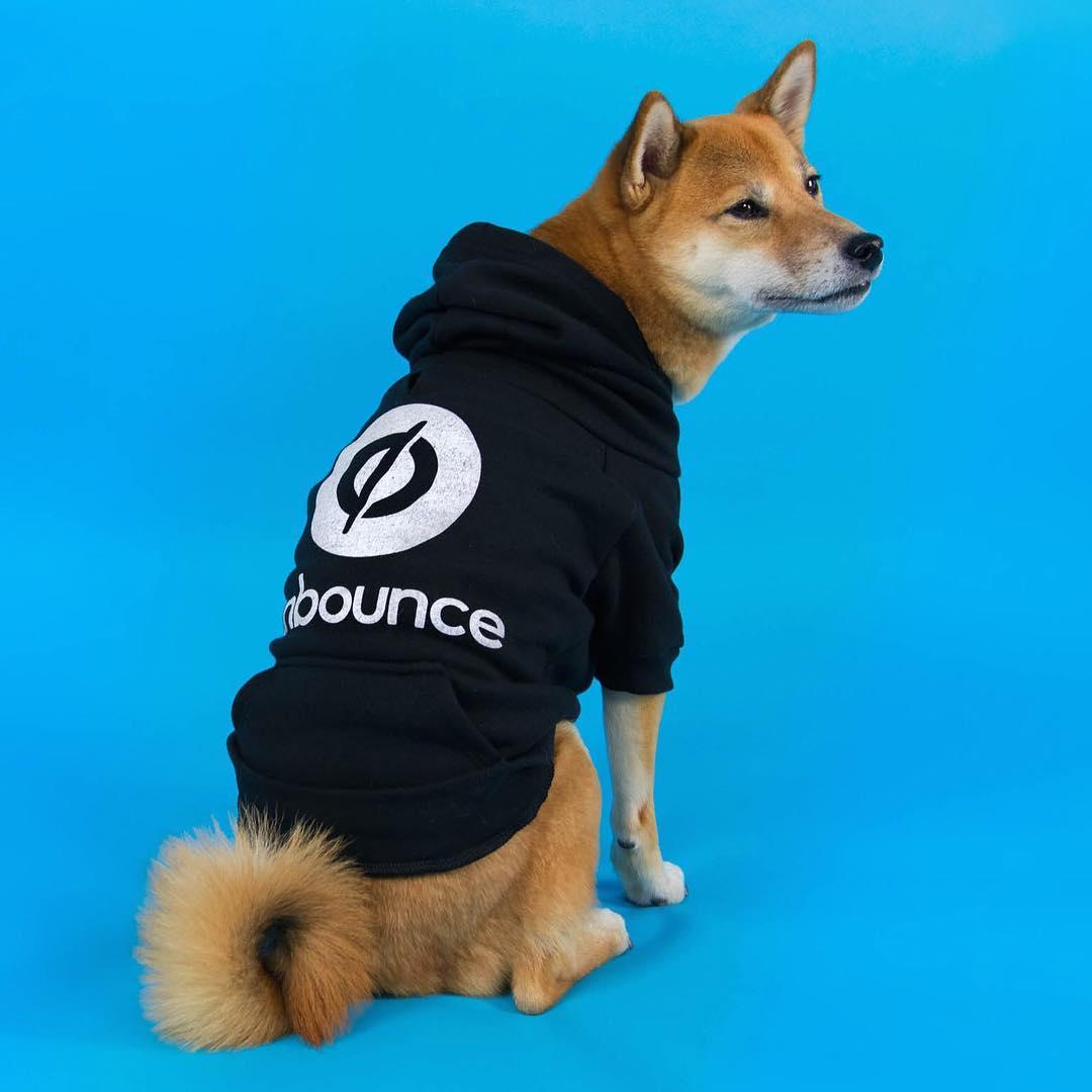 Unbounce dog